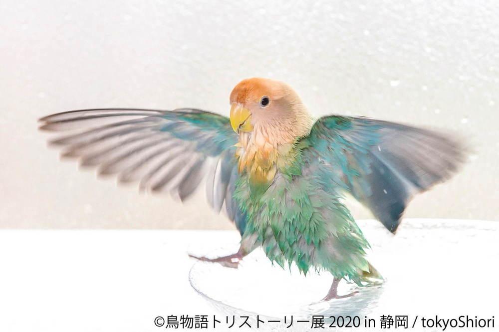 """「鳥物語トリストーリー展」静岡で、""""世界一小さいあひる""""など鳥の写真&ハンドメイドグッズが集結 - https://t.co/vNqWYB3SnG https://t.co/r9BUz8dMQB"""