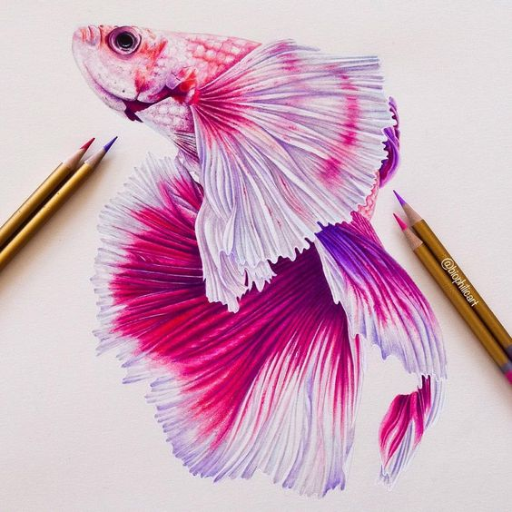 #Siamesefighters are the ultimate . There seem to be no end to their ability to produce additional colours & combinations. They swing from the glittering blacks to soft pastels. The rarest shades include the albino betta, lavender & a solid turquoise fish #tuesdayvibespic.twitter.com/xwLgsRf7Su