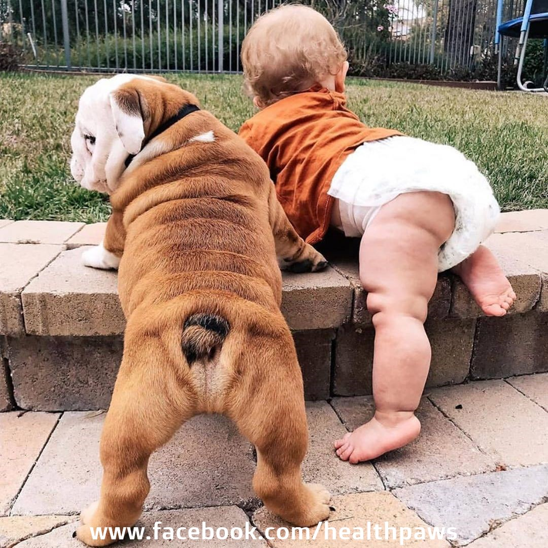 Tag Someone who LOVE DOGSJoin our FB Fan Pagehttp://facebook.com/healthpaws    ....................................................  #dogslife #dogoftheday #doglife pic.twitter.com/B7vzkmgNB9