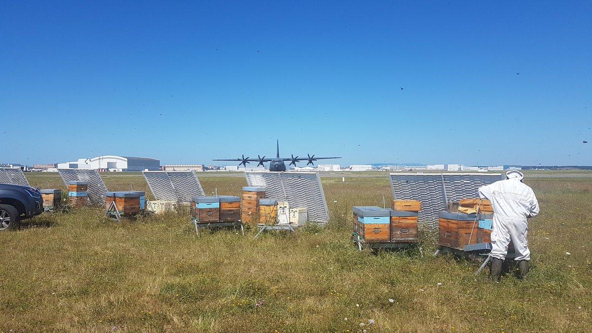 Récolte du miel de l'aéroport en cours ! Avec une petite visite improvisée de l'A400M 🤗🤩 #a400M #honey @Airbus @aeroport_tls https://t.co/PC6MfSACIr