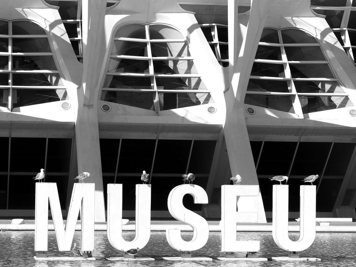 Visita al Museu #gaviotas #seagulls #fotografía #photography #blancoynegro #blackandwhitephotography #blackandwhite #bw #monochrome #monochromephotographypic.twitter.com/tzd4WM7knT