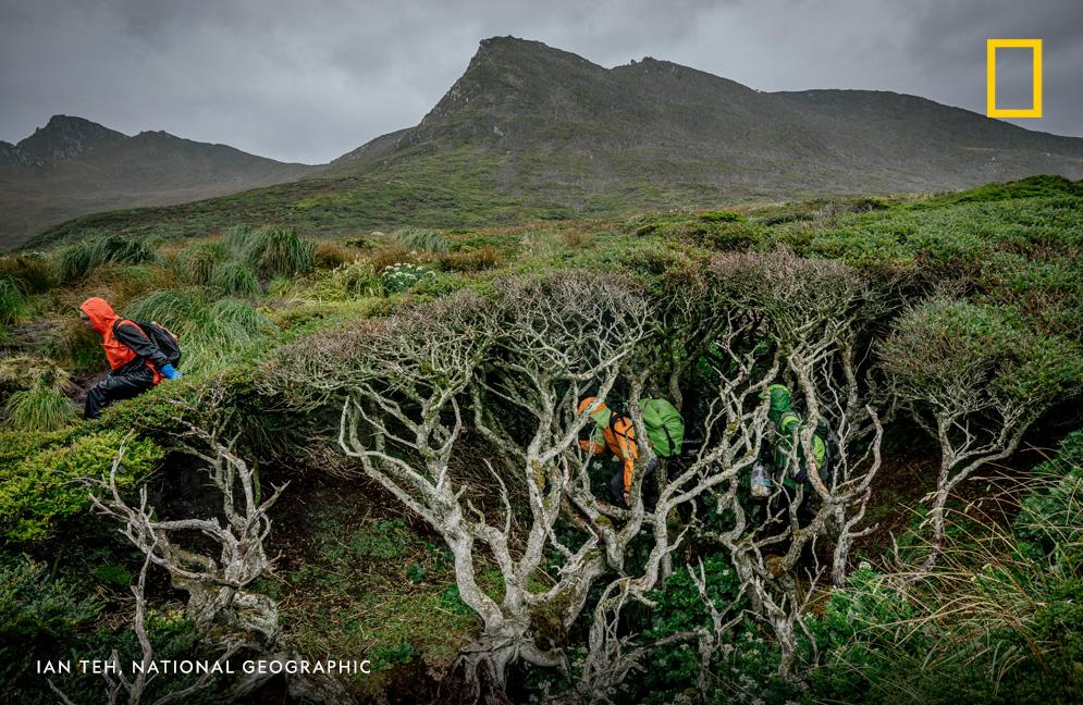 Hurricane-force winds. Otherworldly landscapes: It's all in a day's work for a National Geographic Explorer on a harrowing journey to try to find the world's southernmost tree. Listen to the latest podcast episode of #OverheardNatGeo: https://t.co/zRXDRJgzWv https://t.co/qFwsULWu1W