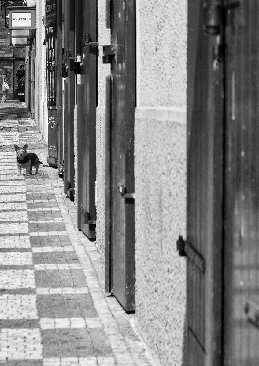 Hafající... Praha 🇨🇿 2020 #vitas69 #vitashenclcom #fuji #xe1 #fujieurope #fujiczech #streetphotography #streetshot #streetphoto #street #streetlife #Prague #Praha #citylife #czechphoto #photooftheday #bnwphoto #bnwfuji #bnw #czechstreetphoto #praguecity #people https://t.co/rWIeOhqtI3