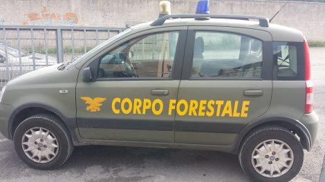 Corpo forestale, dall'Ars ok allo sblocco dei concorsi - https://t.co/hxKIOlRqo5 #blogsicilianotizie