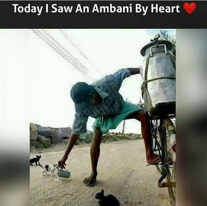 #HumanityFirst #Humanity #animalsworld #Kindness  This man even after not being financially strong, still feeding stray animals 😻 😍😍💞💞💖💖💖 https://t.co/QtWe2vuZvV