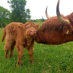 """Image for the Tweet beginning: """"Stop fussing mum!"""" Happy #Coosday"""