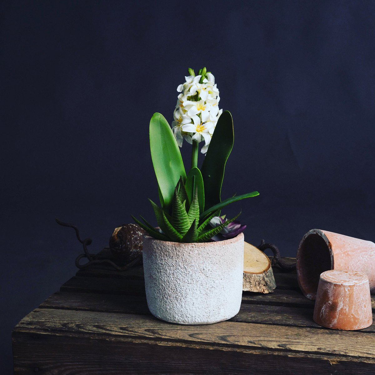 Beautiful, elegant (and shhh....artificial!). Our White Potted Hyacinth is set to stun in a stoneware pot surrounded by miniature succulent plants https://bit.ly/2ZFYEPU  Bisou x #homedecor #interiordesign #giftideas #giftsforher #homegifts #artificialplants #hyacinth #succulentspic.twitter.com/9K04jGyUT2