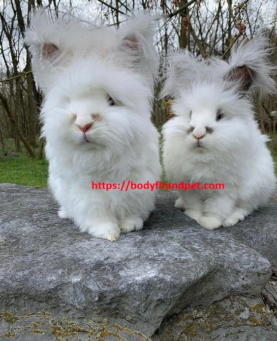 #bunny #weeklyfluff #cute #dailyfluff #dailyflufffeature #rabbitsofinsta #rabbitsofinstagram #love #adoptdontshop #rabbits #cats #bunnies #catsofinstagram #kittensofinstagram #kittens #catsofinsta #deardiary #rescuecat #fluffofinsta #catsandrabbits #kittensofig #catdiarypic.twitter.com/qSZ0KUW9G3