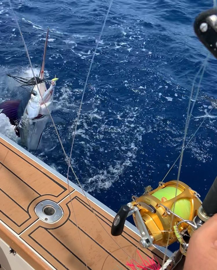 Pecan Island, LA - Capt. Mike Pratt on Outta the Blue went 1-1 on Blue Marlin and 1-1 on White Marlin.