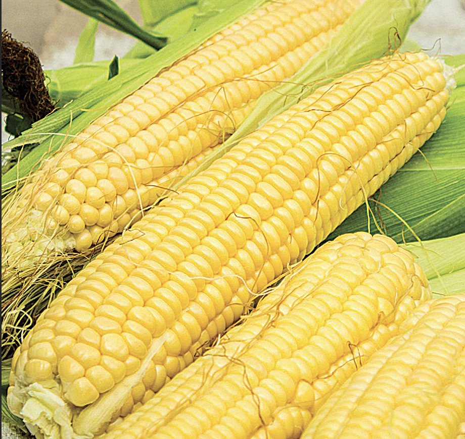 ❗️🌽 Our vegetable of the month is corn. Take home some organic, non-gmo corn from Brentwood. A summer must have. Full ad on our website: https://t.co/ipcVyuvG9D  #draegers #draegersmarket #sanmateo #menlopark #losaltos #danville #memorialday #wine #organic https://t.co/s2728KVuGM