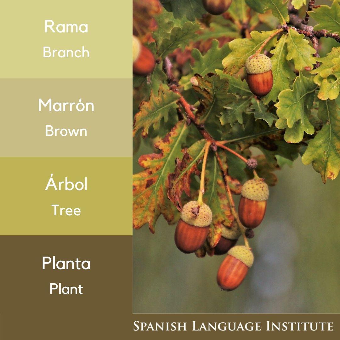 🇪🇦Bellota 🇬🇧Acorn 🇨🇿Žalud  #Prague #Praha #CzechRepublic #Learn #Spain #LearnSpanish  #Spanish #Grammar #Vocabulary #SpanishCourses #LanguageLearning https://t.co/9Zp5aW79xW