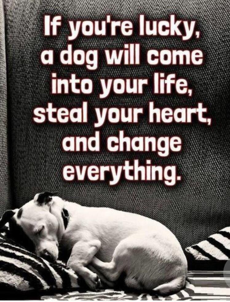 #pitbulllove #doglover #lovedogs #unconditionallove #adoptdontshop #shelterdogs #rescuedogs #familypetpic.twitter.com/93be4ZrnXi