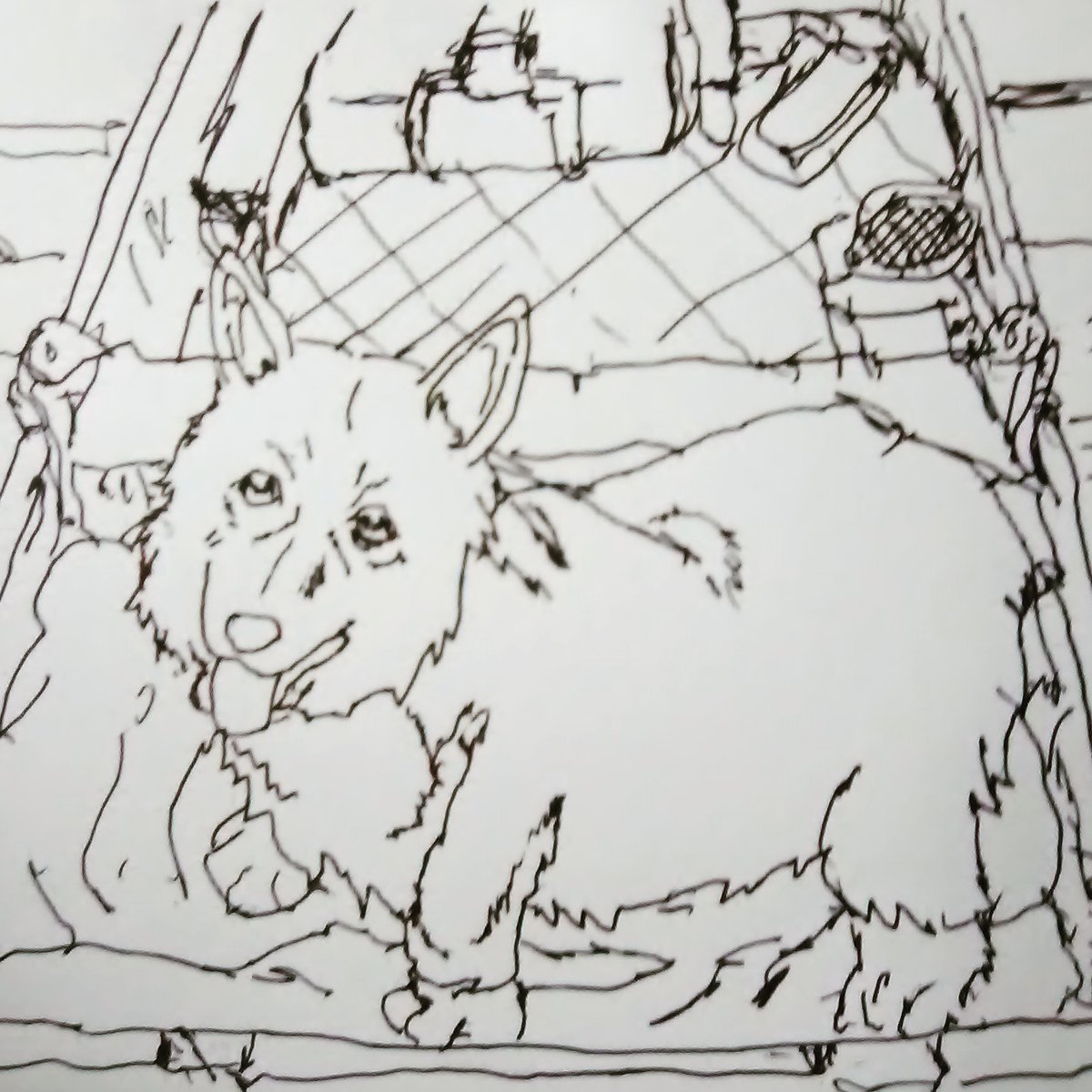 """#draweveryday2020 Ein, the Welsh Corgi/ """"data dog"""" from her 1st appearance in #CowboyBebop #anime #draweveryday pic.twitter.com/t4jT8oZa8D"""