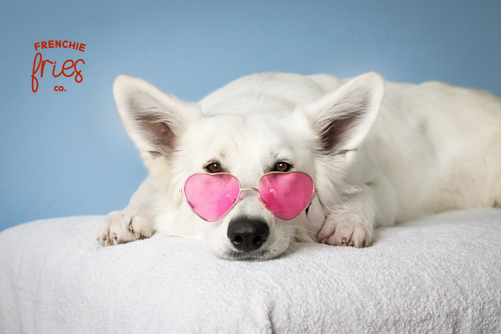 Groovy, (fur) baby. #FrenchieFriesCo #CBDforpets  https://soo.nr/64Ft  #frenchiefriescbd #cbdfordogs #petwellness #pethealth #cbdforcats #petproducts #dogs #dog #thedodo #cutepetclub #bestwoof #ruffpost #weeklyfluff #dailyfluff #fashion #goodvibes #style #relaxpic.twitter.com/gKAE691OTk