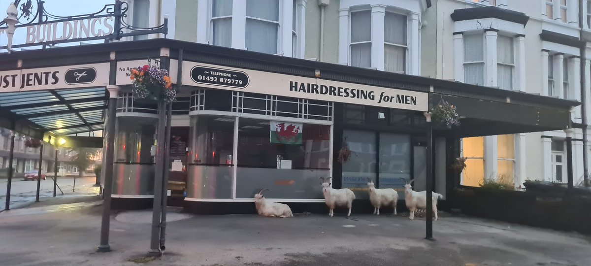 Queues forming already in Llandudno for haircuts #llandudnogoats @Llandudno_INFO @BBCWales