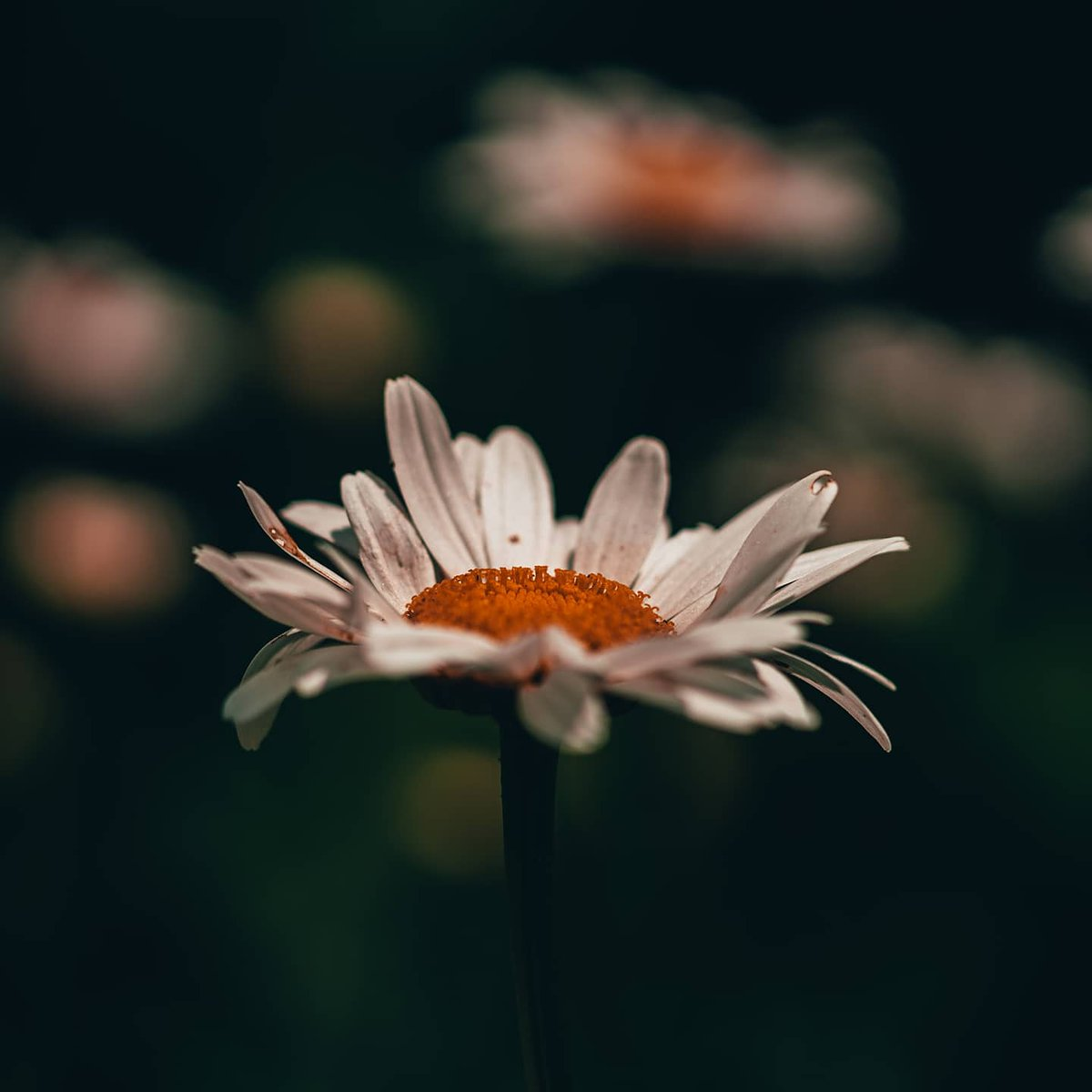 Sony a7riii Sony 90mm macro  1/3200sec | f/2.8 | ISO 100  #sony #sonyalpha #sonyphotography #bealpha #alphagang #sonya7riii #a7r3 #a7riii #sel90m28g #flowers #flower #flowerphotography #nature #naturephotography #nature_moods #leaves https://t.co/PwUA16CxEZ