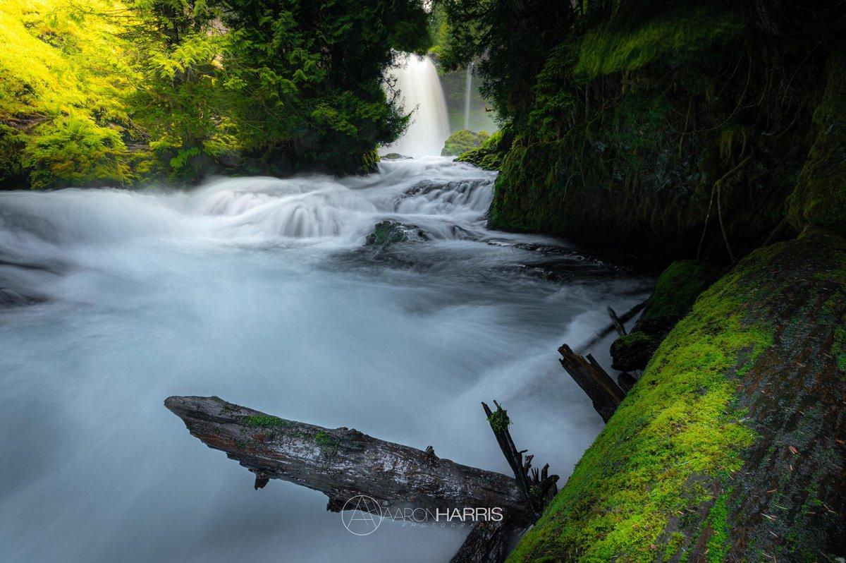 Chiller On McKenzie #cascadiaexplored #pnw_shooters #pnw_roaming #NaturePhotography #pnwcrew #keepitwild #nikonnofilter #landscapephotography #pnwdiscovered #nature_perfection #pnwescapes #westbysouthwest #pacificnorthwest #naturaloregon #pnwwonderland @NikonProEurope @NikonUSA https://t.co/Ex2uJ8iQJg
