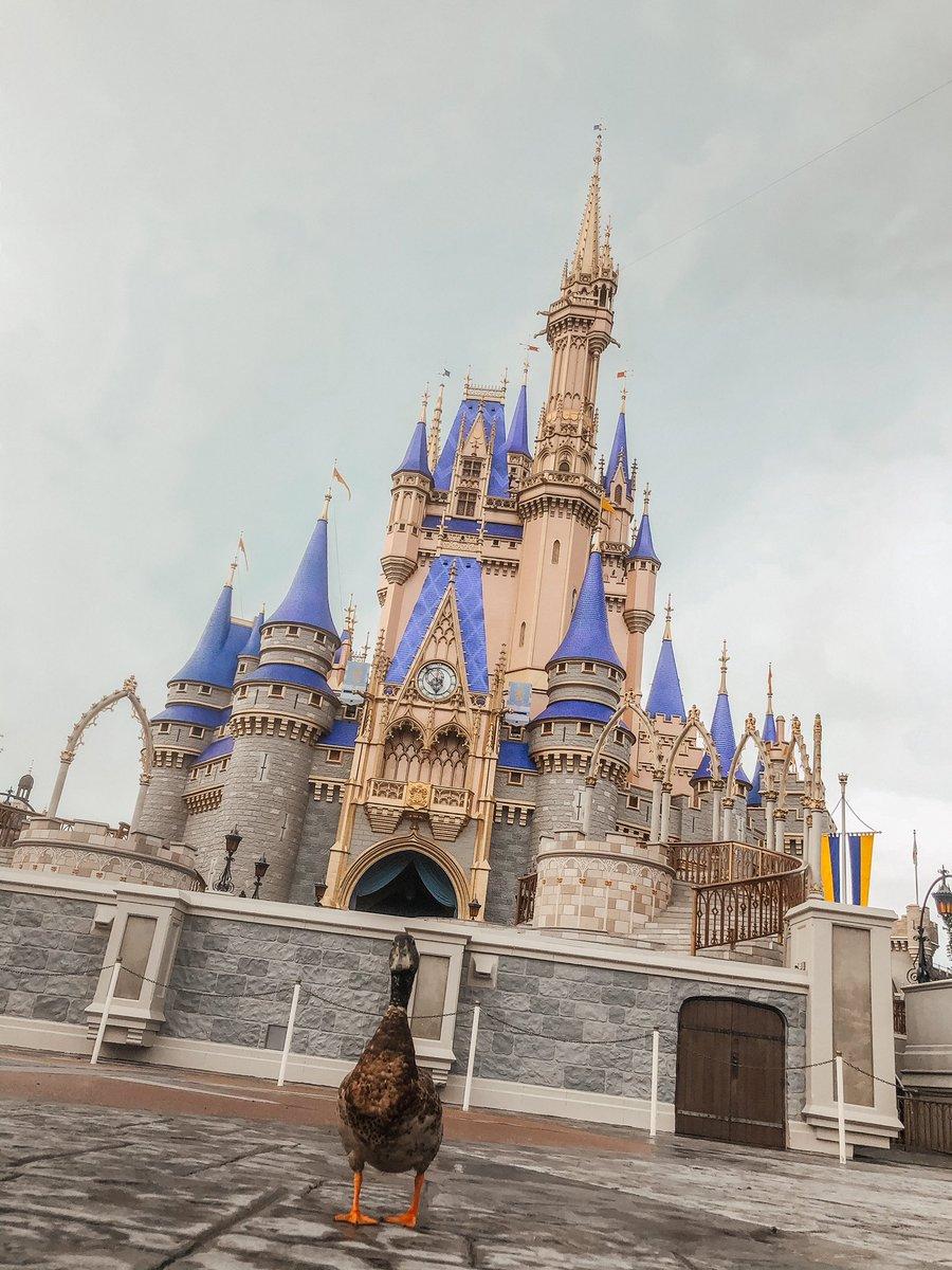 @laurenlovich's photo on Disney