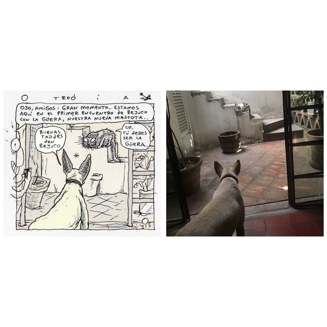 Archivo molusco de @jisvagoimperial : La imagen que inspiró el cartón de hoy (otro día #5414) se publicó en la cuenta de Instagram de @ChoraTv el 22 de mayo. El tema esta semana es sobre La Güera (perrita adoptada en la cuarentena) conociendo a Bejuco (antiguo gato de la familia) https://t.co/cSZln0zl5v