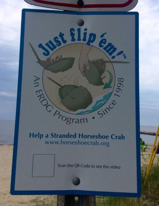 please flip the crab! please flip the crab!
