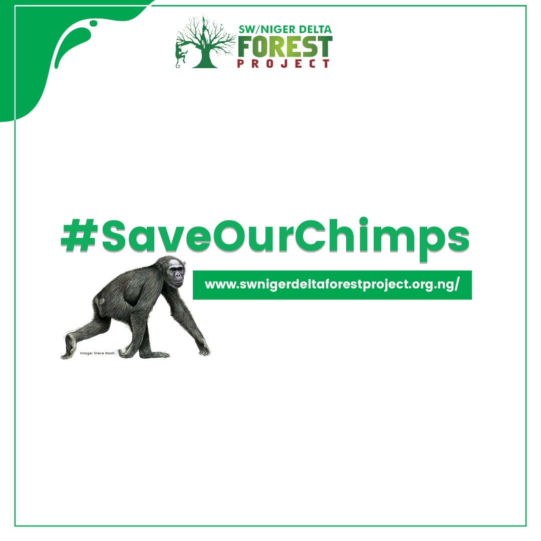 Some research studies have found that human disturbance activates chronic levels of stress hormones in chimpanzees which leads to reproductive failure. With the new conservation area created within the Ise forest reserve, hopefully, chimpanzee population will make a come back https://t.co/5zNqO5yG9k