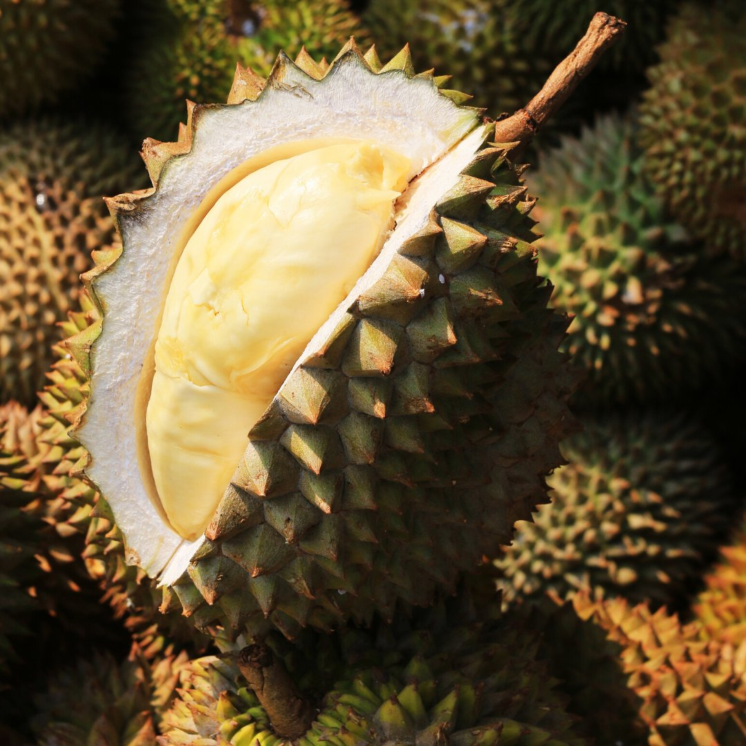 Did you know that due to its overpowering smell, durian has been banned on many types of public transport across Thailand, Japan and Hong Kong? Have you ever tried durian? Comment your description of durian's taste below! #EVAair #evaairus #staralliance #iFlyEva https://t.co/icQMc1U0dN