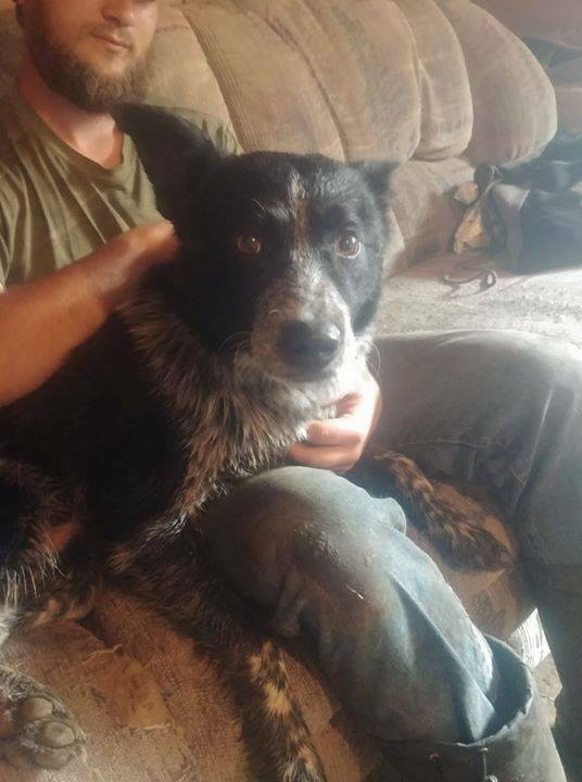 FOUND black/brown/grey/white Heeler type dog near #rockyford Ab, #NEofClgy. Msg Sushannah if you know pup. If claiming must provide proof of ownership. Pls rt and share to help find family.  Update: We had the vet check, not tattoo or chip  Posted on another page. My father …pic.twitter.com/3qyx90m8vH