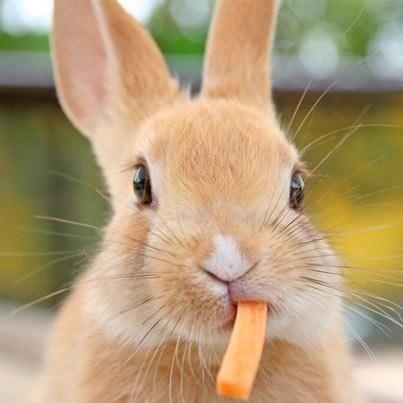 I am the real bunny token #bitcoin #bunnies pic.twitter.com/tFqChbhUk7