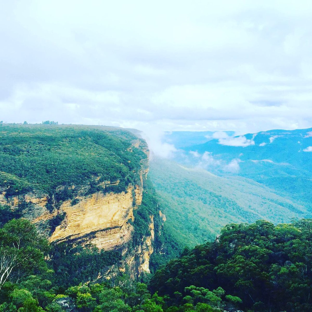 I literally live in the clouds  ⁣ .⁣ .⁣ .⁣ .⁣ .⁣ #trip # #bluemountainsnsw #dronestagram #lovesydney #nature #bluemountains #sunset #travel #nsw #mountains #australiagram #bluemountainsnationalpark #royalnationalpark #katoomba #hiking #ig #visitnsw #visitbluemountainspic.twitter.com/X2JBF2QCoi