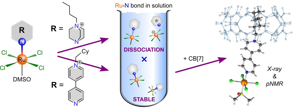 #Supramolecular zwitterionic #ruthenium complexes with #cb7 #cucurbituril for anti #cancer #drug delivery by @LabMarek. Through-space #paramagnetic #NMR published in @InorgChem @CEITEC_Brno @MasarykUni @muni_cz https://t.co/nbRxB8a5Bn https://t.co/zfAOLCSWOH