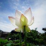 Image for the Tweet beginning: Dairen-ji Temple in #Kyoto -