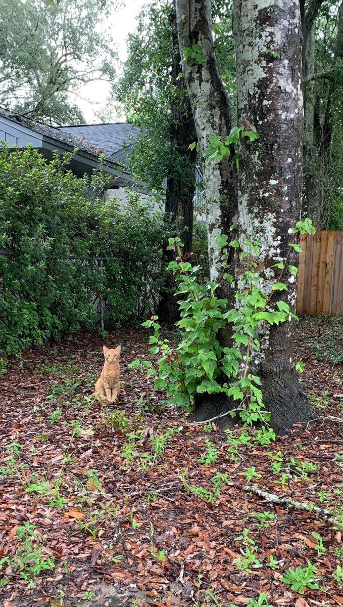 This is #Whitman he's my new #Cat #Friend that has made my #Yard his #Playground   #Cats #Cat #Kittens #Kitten #Kitty #Pets #Pet #Meow #Moe #CuteCats #CuteCat #CuteKittens #CuteKitten #MeowMoe #Hes   https://t.co/yCQsYQo1cp https://t.co/lohw0AVwnP