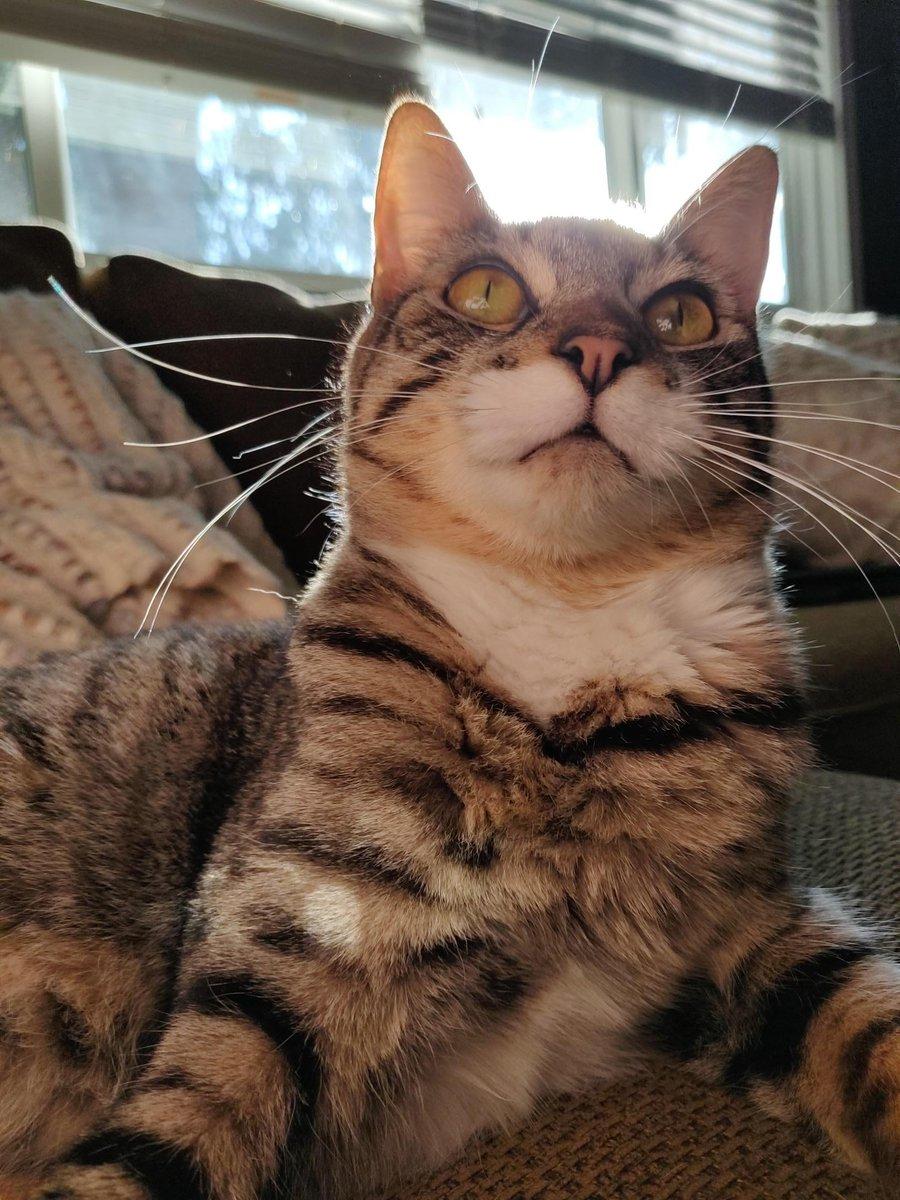 #Majestic #Whiskers   #Cats #Cat #Kittens #Kitten #Kitty #Pets #Pet #Meow #Moe #CuteCats #CuteCat #CuteKittens #CuteKitten #MeowMoe    https://t.co/ZGnWUL0lLU https://t.co/RNWl9J3kgp