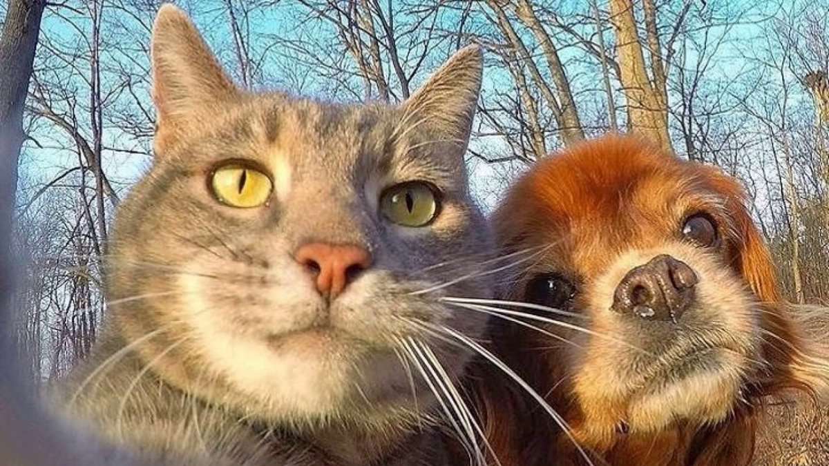 #Funny #Dogs and Cute #Cats. Try not to ...   #Cats #Cat #Kittens #Kitten #Kitty #Pets #Pet #Meow #Moe #CuteCats #CuteCat #CuteKittens #CuteKitten #MeowMoe #Animals #AnimalsLife #AwesomeAnimals #AwesomeCat #Cat #CuteAndFunnyDog #CuteCats   https://t.co/DznIx6byFP https://t.co/aIrVcFlCla
