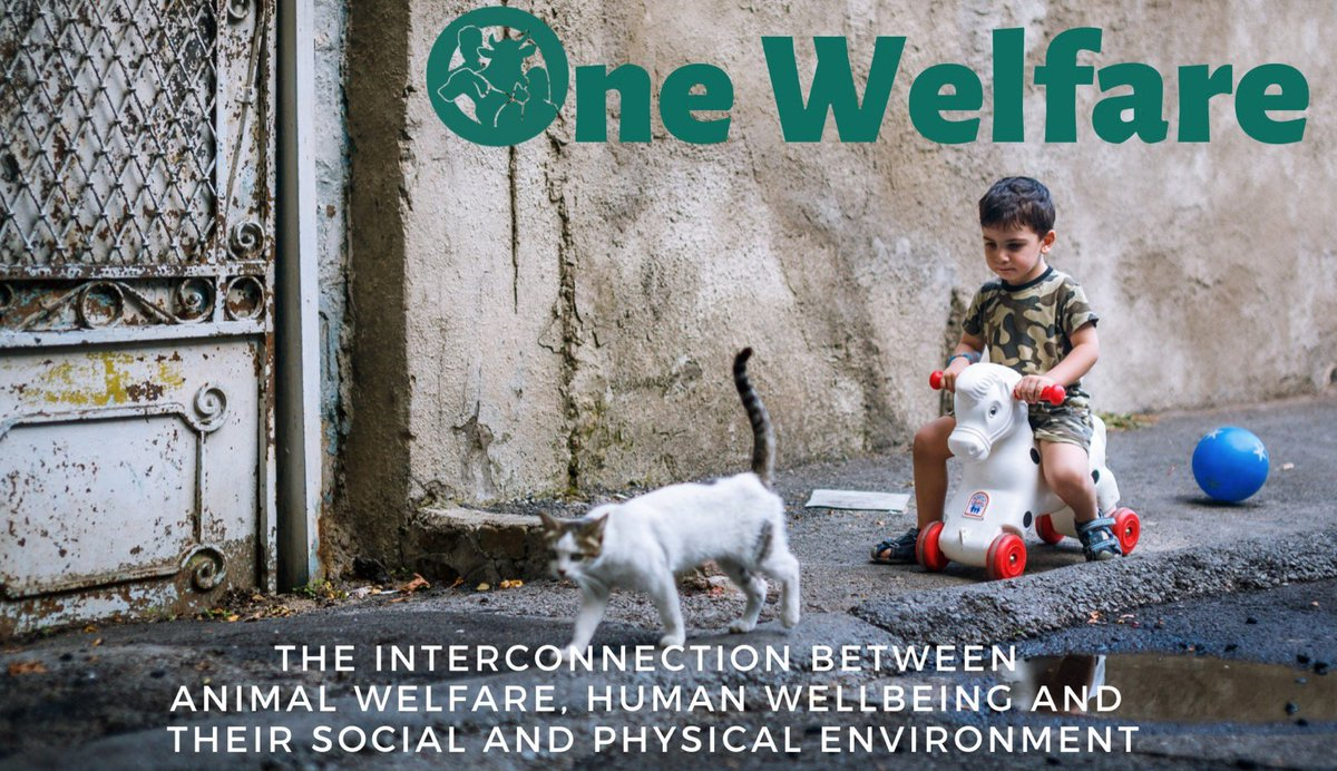 What is #onewelfare ? One Welfare is the interconnection between #animalwelfare #humanwellbeing and their social and physical #environment -read further about One welfare here >> https://t.co/zaiErjdiLZ https://t.co/mYHQ2Wcb6r