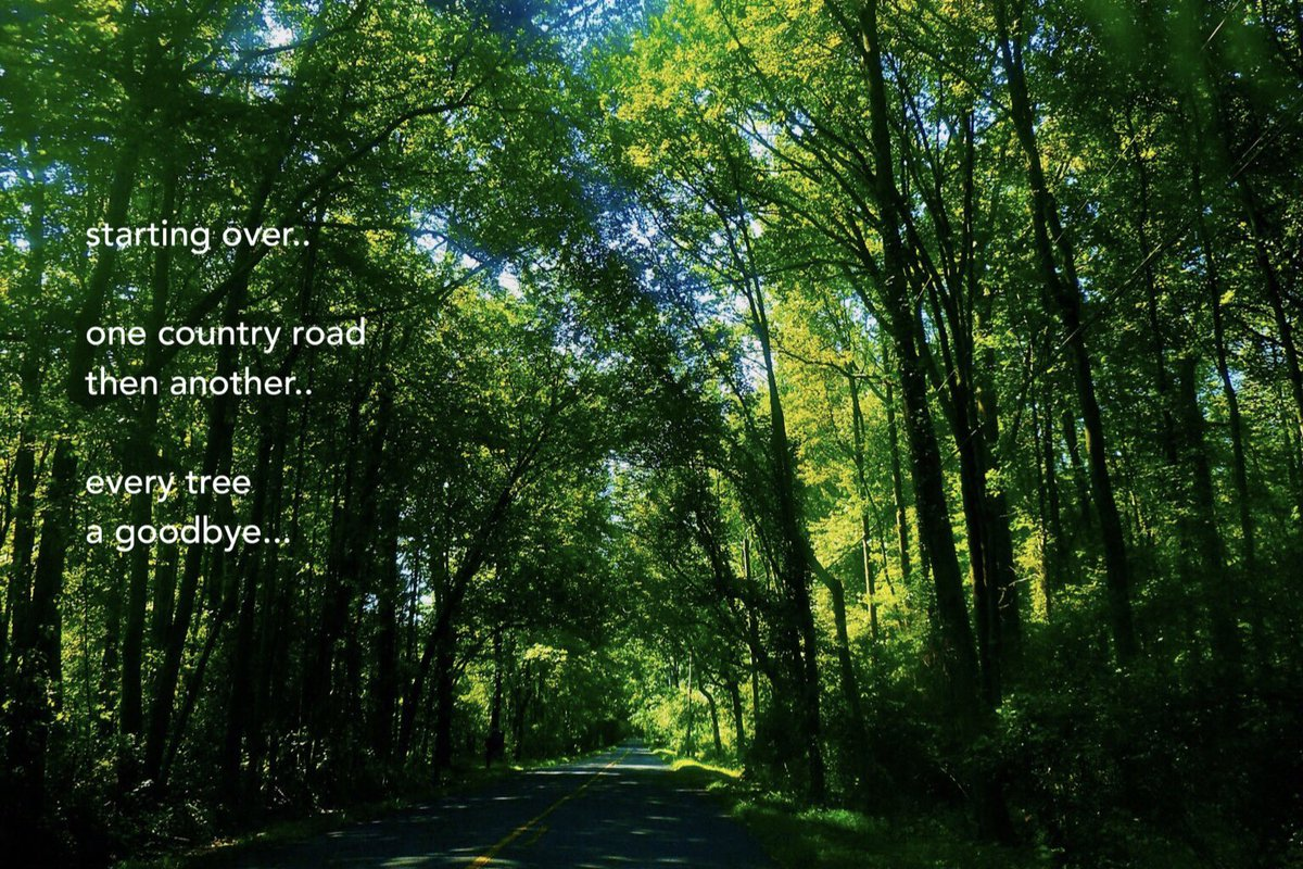 starting over one country road then another every tree a goodbye....     #micropoetry #5lines<br>http://pic.twitter.com/x8njWgp4VH