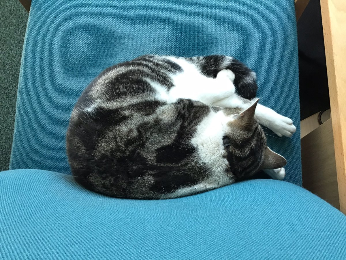 I'm really sorry, this chair is occupied headteacher, you'll have to unplug your computer and move it somewhere else. I'm catching up on some zeds this morning. 💤 💤  Have a lovely day friends stay safe and take care #CatsOfTwitter #cats #wednesdaymorning #schools #ambassacats https://t.co/M8d1uied2s
