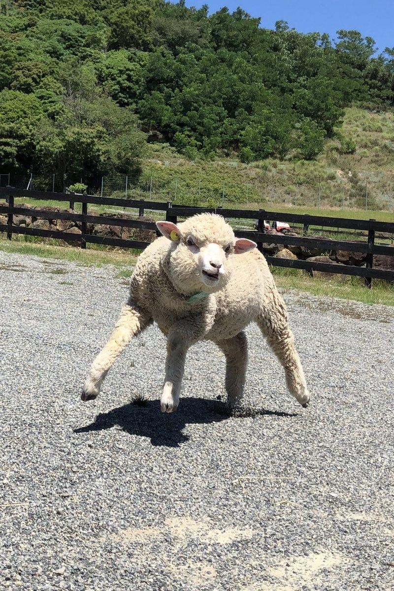噂の羊を作ってみました。あんま似なかったけどやりたかったことは伝われ