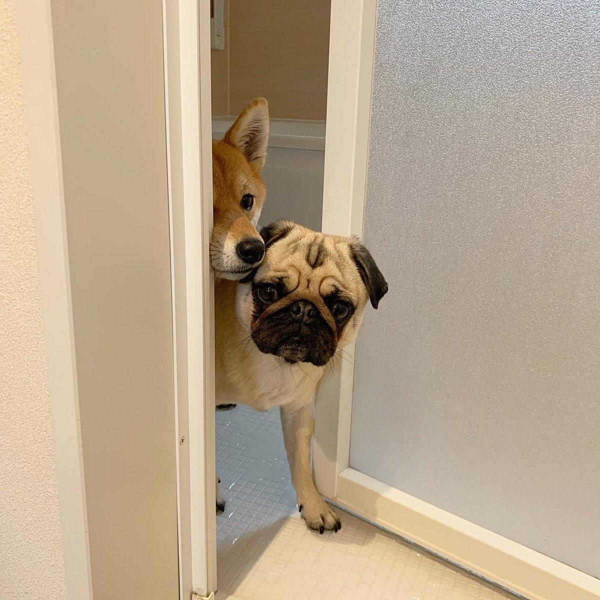 シャイニング〜。出てきそうで出てこない…