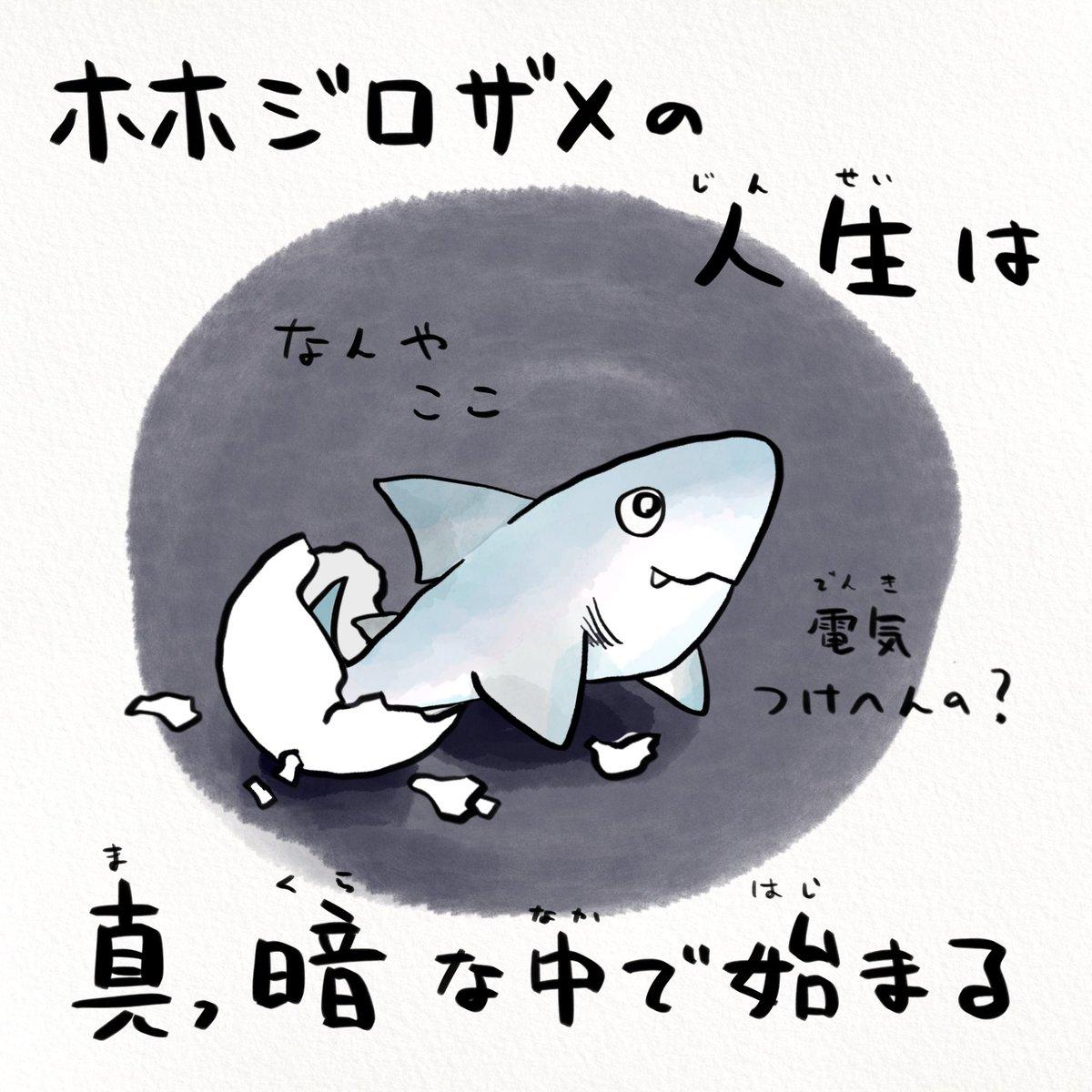 RT @sakana_bro: ホホジロザメの人生ベリーハード https://t.co/NE7KnB5e0I