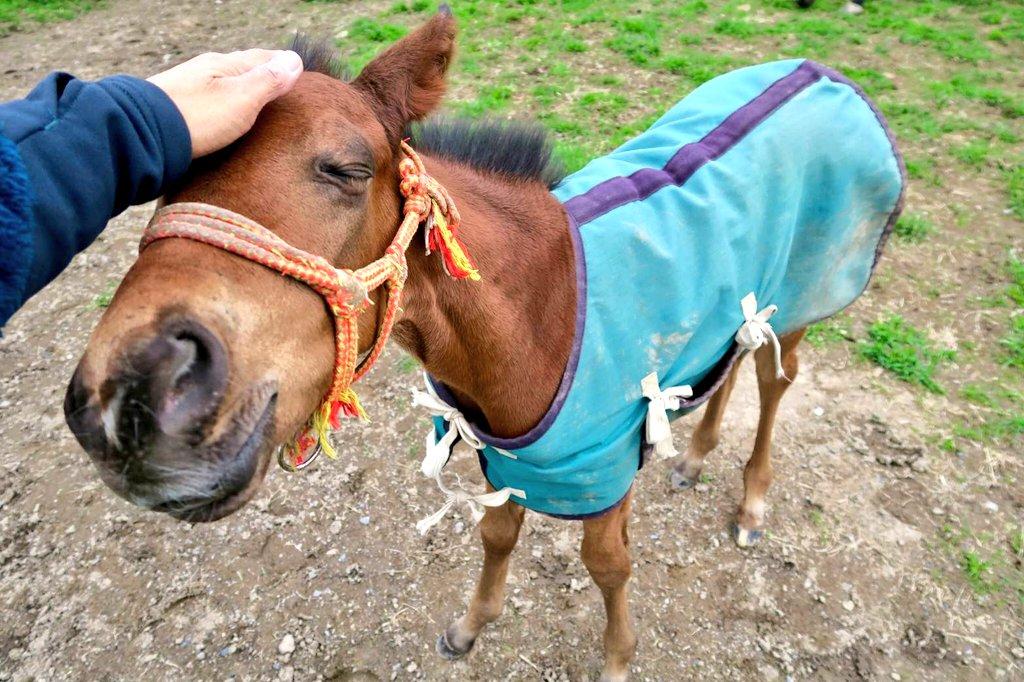 7月8日 大井競馬第9レースアーバンステージ文月賞我が家の生産馬🐴キラービー号(9番)が出走します!休み明けの一戦となりますが馬体重成長分と見て元気に走ってきてほしいです!熱い応援よろしくお願いいたします‼️