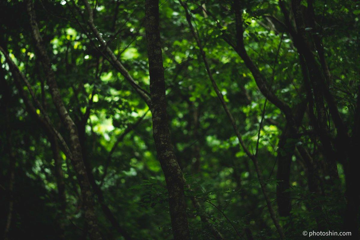 深緑 deep green