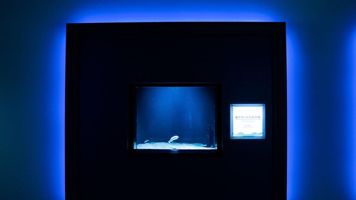 ここどこだと思いますか?実は香川にある四国水族館なんです。