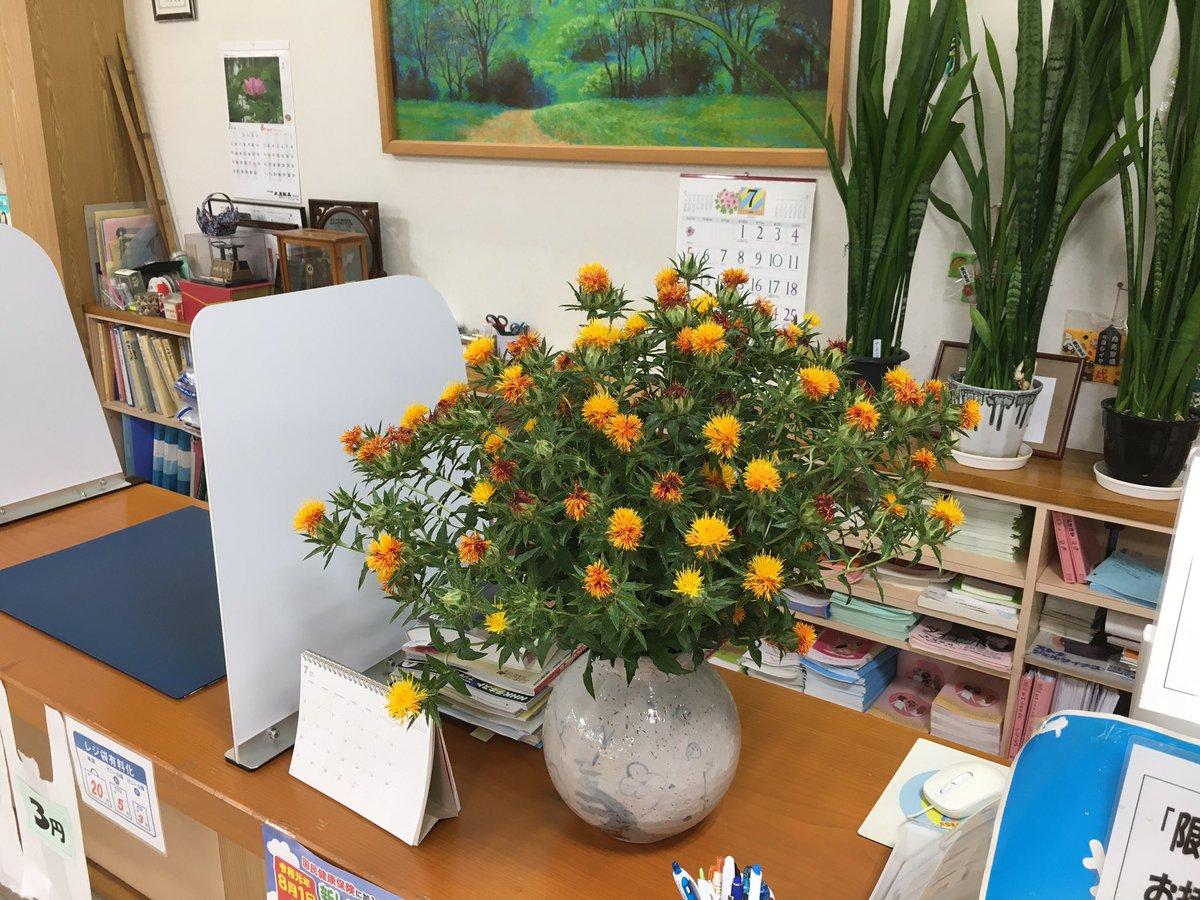 昨日、お客様から頂戴した紅花、妻が花瓶を持ってきて飾りました。色鮮やかです。