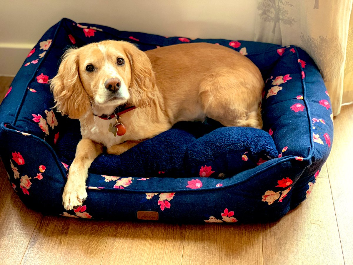 Oh hi.... I've had a haircut and got a lovely new @Joulesclothing bed .... he actually smells nice for once! https://t.co/5BR3IeYCI6