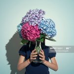 Image for the Tweet beginning: Little girl and hydrangeas  #gardening
