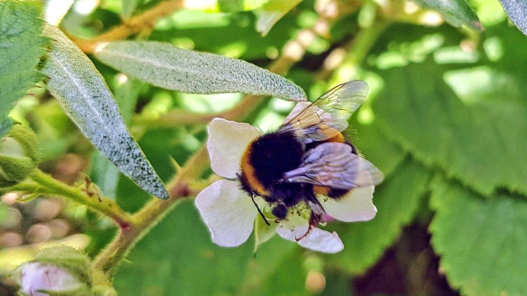 We're all enjoying the summer flowers #bees #NaturePhotography #Flowers #summer #outdoors #walking #wednesdaymorningpic.twitter.com/lZepbmU79y