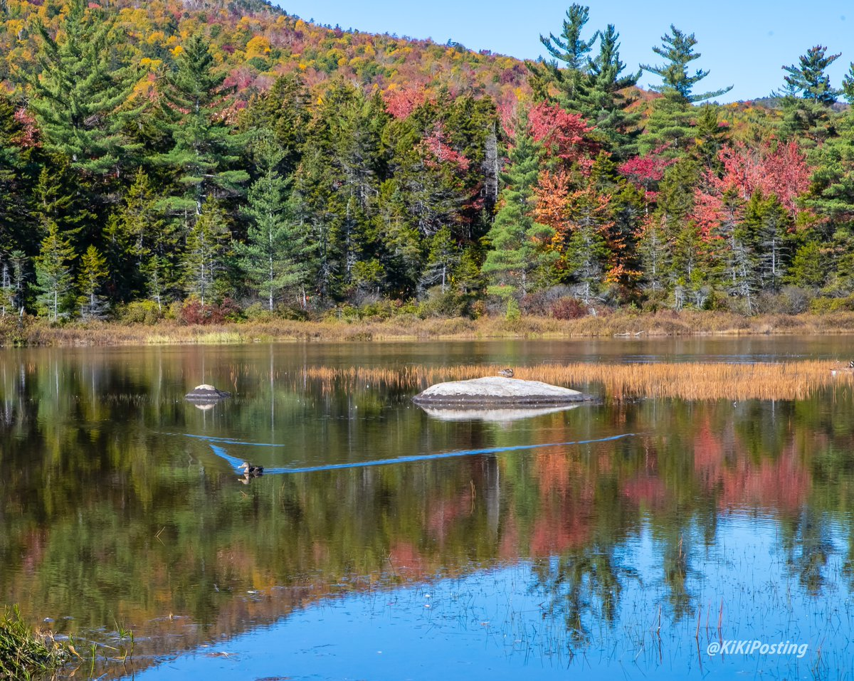 Another day in paradise ❤️#photo #photooftheday #photography #landscapephotography #naturetherapy #naturelover #NaturePhotography #nature #NewHampshire #PHOTOS #NH #NATURE_WORLD #PictureOfTheDay #picoftheday #water #Zen #solitude #reflection #reflections #foliage https://t.co/0RDYNeN2yh