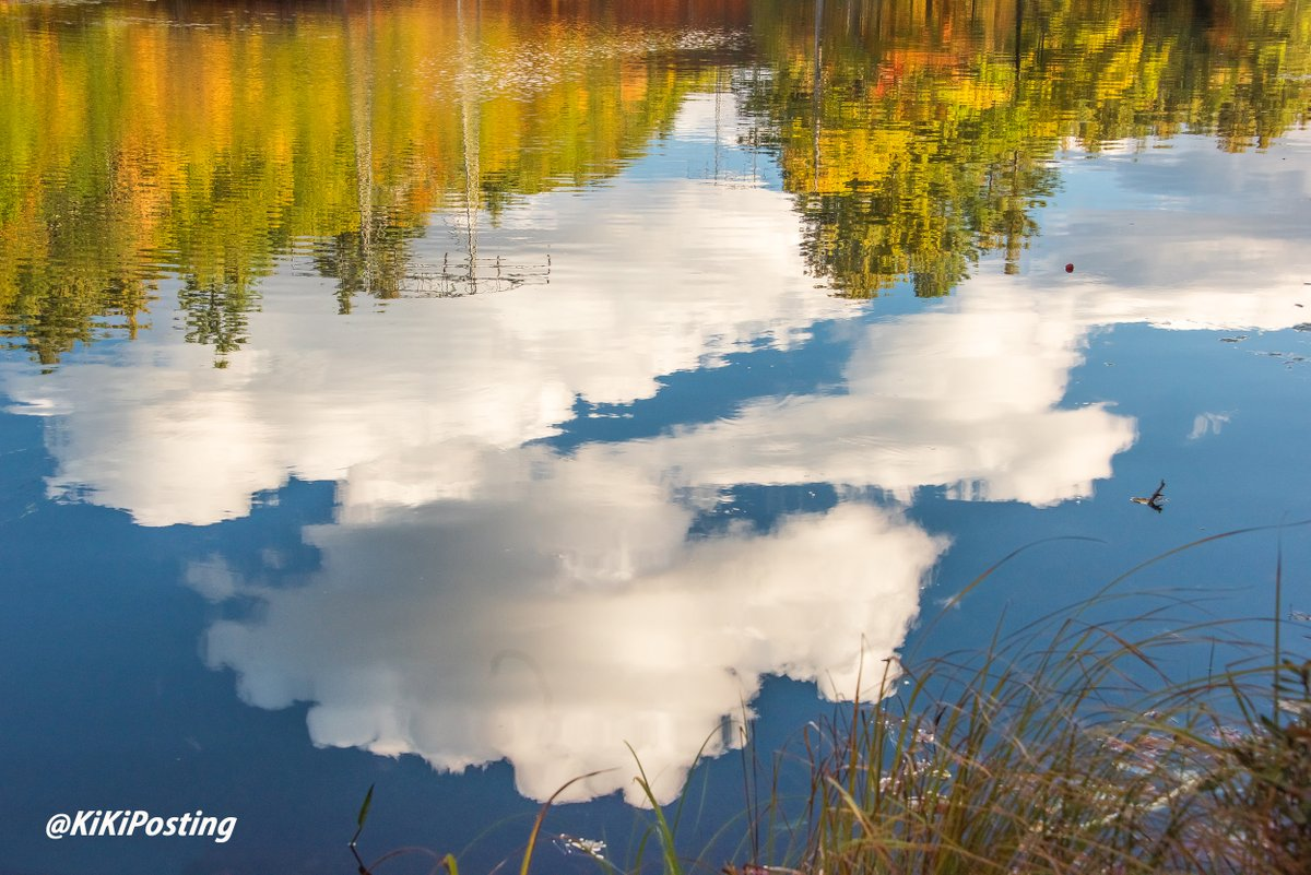 What a reflection! #photo #photooftheday #photography #landscapephotography #naturetherapy #naturelover #NaturePhotography #nature #NewHampshire #PHOTOS #NH #NATURE_WORLD #PictureOfTheDay #picoftheday #water #Zen #solitude #reflection #reflections #foliage https://t.co/495sYJxJxa