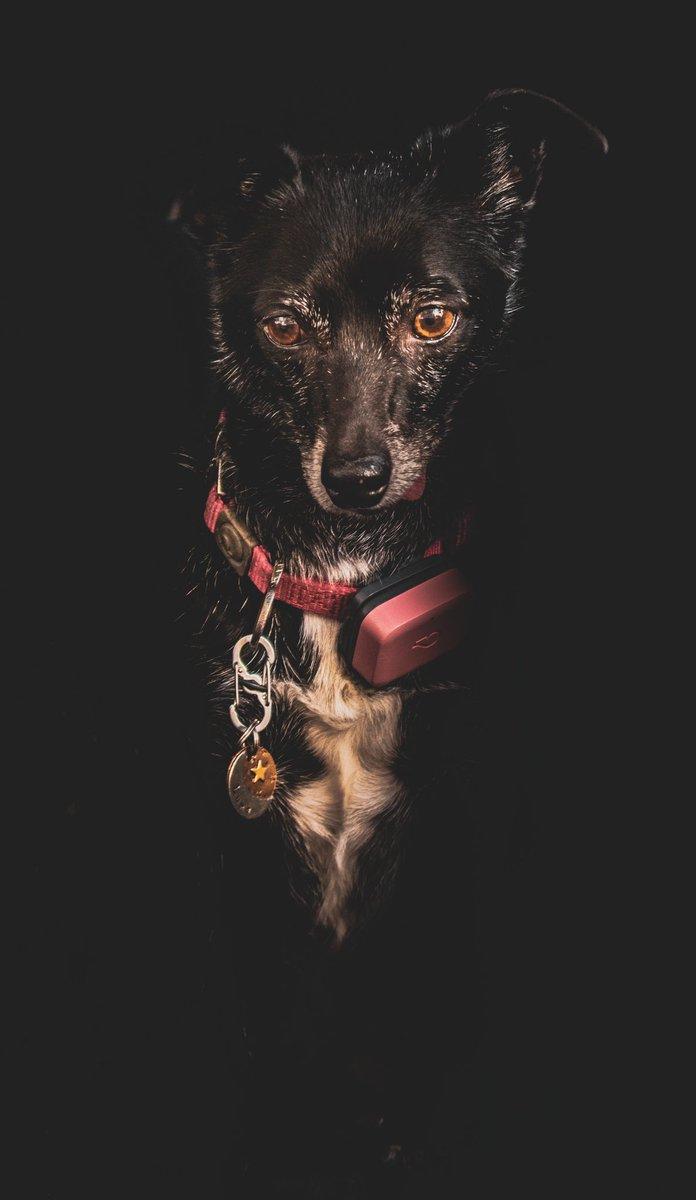 My little princess Luna #petportrait #petphotography #petphotoshoot #petphotographer #nikon #nikonphotography #nikonphoto #forhire #furbaby #furchild #furchildren #adobelightroom #lightroommobile #lightroom #adobecreativecloudpic.twitter.com/i5Ef58pQVJ